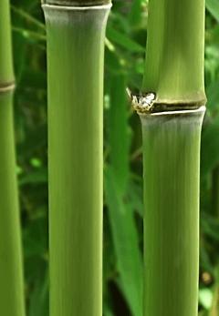 bambus-socken-viskose-bambus.png