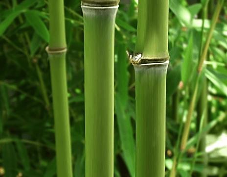Bambus Socken