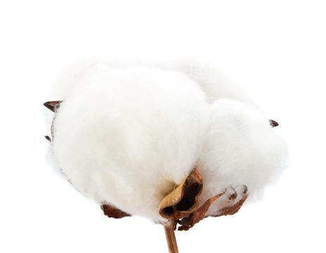 Baumwolle Socken und Strümpfe aus Baumwolle
